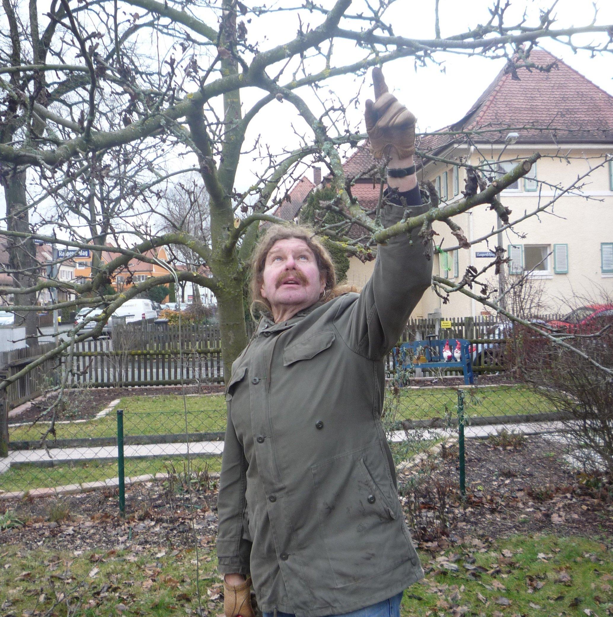 Baumschnitt - © Veranstalter